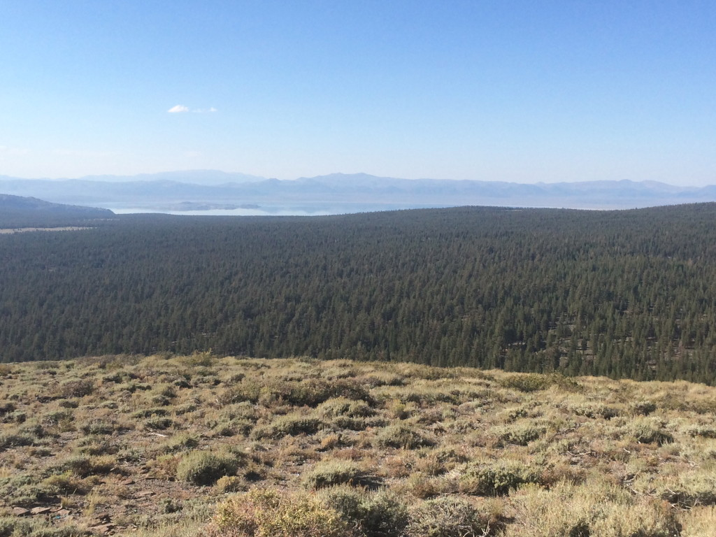 view from Bald Mountain Fire Lookout